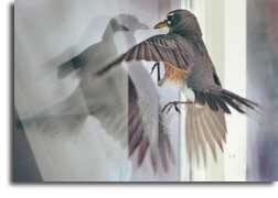 bird_hitting_window_small